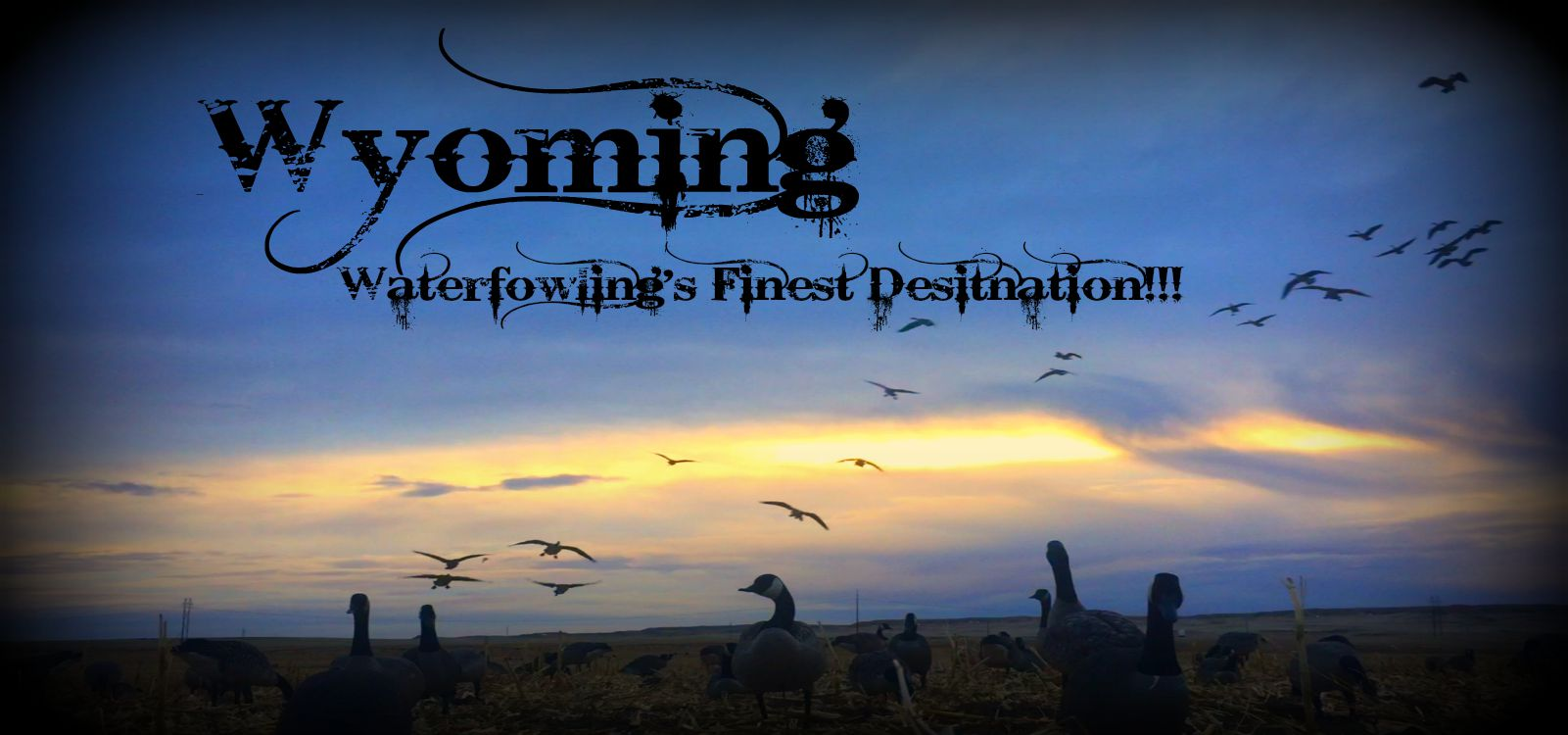 Guided Goose Hunting - Wyoming
